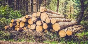 woods with cut logs laying on ground