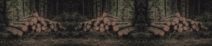 chopped down trees logs stocked ready to be cut for firewood