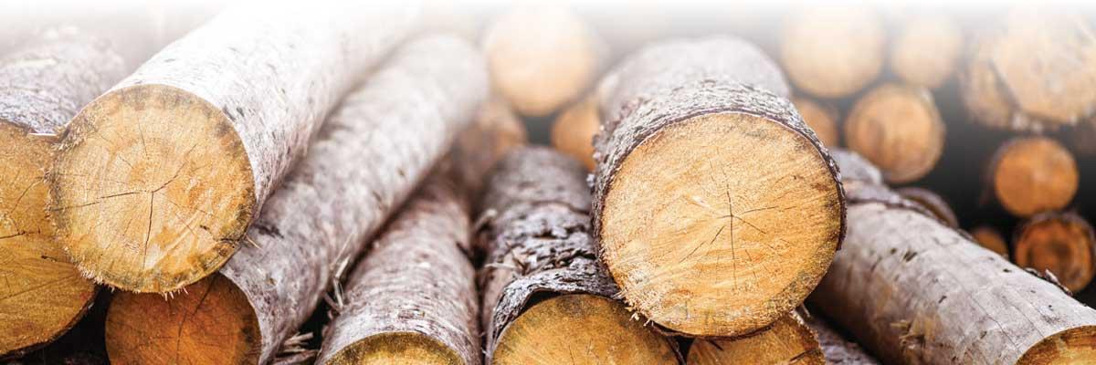 Large-logs